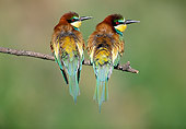 BRD 13 WF0196 01