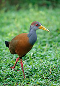BRD 13 WF0198 01