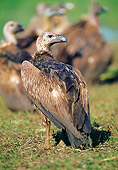 BRD 13 WF0199 01