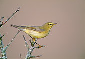 BRD 13 WF0202 01