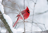 BRD 13 GR0002 01
