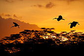 BRD 13 JZ0001 01