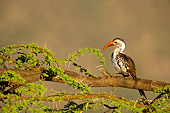 BRD 13 JZ0004 01