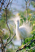 BRD 13 LS0001 01