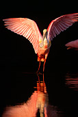 BRD 13 LS0003 01