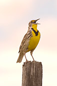 BRD 13 NE0001 01