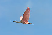 BRD 13 NE0009 01