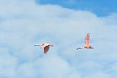 BRD 13 NE0010 01