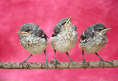 BRD 13 RC0001 01