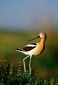 BRD 13 RF0217 01