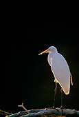 BRD 13 RF0218 01
