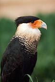 BRD 13 RK0006 01