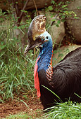 BRD 13 RK0007 09
