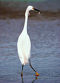 BRD 13 RK0044 01