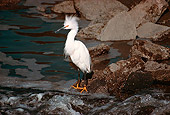 BRD 13 RK0058 01