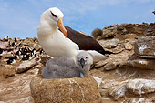 BRD 13 SK0008 01