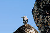 BRD 13 SK0012 01
