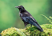BRD 13 TK0001 01