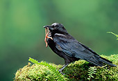 BRD 13 TK0002 01