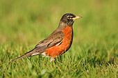 BRD 13 TK0006 01