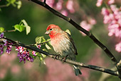 BRD 13 TK0007 01