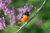 BRD 13 TK0010 01