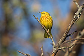 BRD 13 TK0011 01