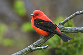 BRD 13 TK0014 01