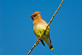 BRD 13 TK0015 01