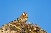 BRD 13 TK0016 01