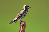 BRD 13 TK0017 01