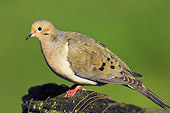 BRD 13 TK0019 01