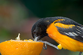 BRD 13 TL0007 01