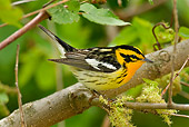 BRD 13 TL0008 01