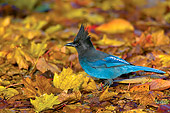 BRD 13 TL0009 01