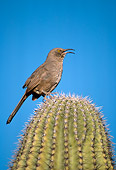 BRD 13 TL0014 01