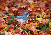 BRD 13 TL0016 01