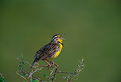 BRD 13 TL0019 01