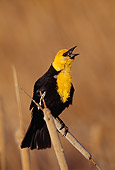 BRD 13 TL0020 01