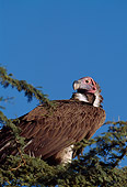 BRD 13 TL0028 01