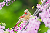 BRD 13 TL0029 01