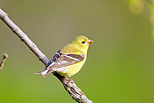 BRD 13 TL0031 01
