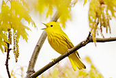 BRD 13 TL0032 01