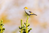 BRD 13 TL0036 01