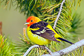 BRD 13 TL0039 01