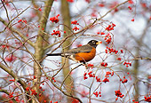 BRD 13 TL0044 01