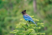 BRD 13 TL0046 01