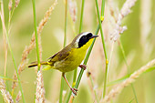 BRD 13 TL0047 01