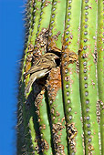 BRD 13 TL0057 01