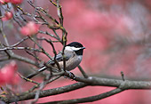 BRD 13 TL0060 01